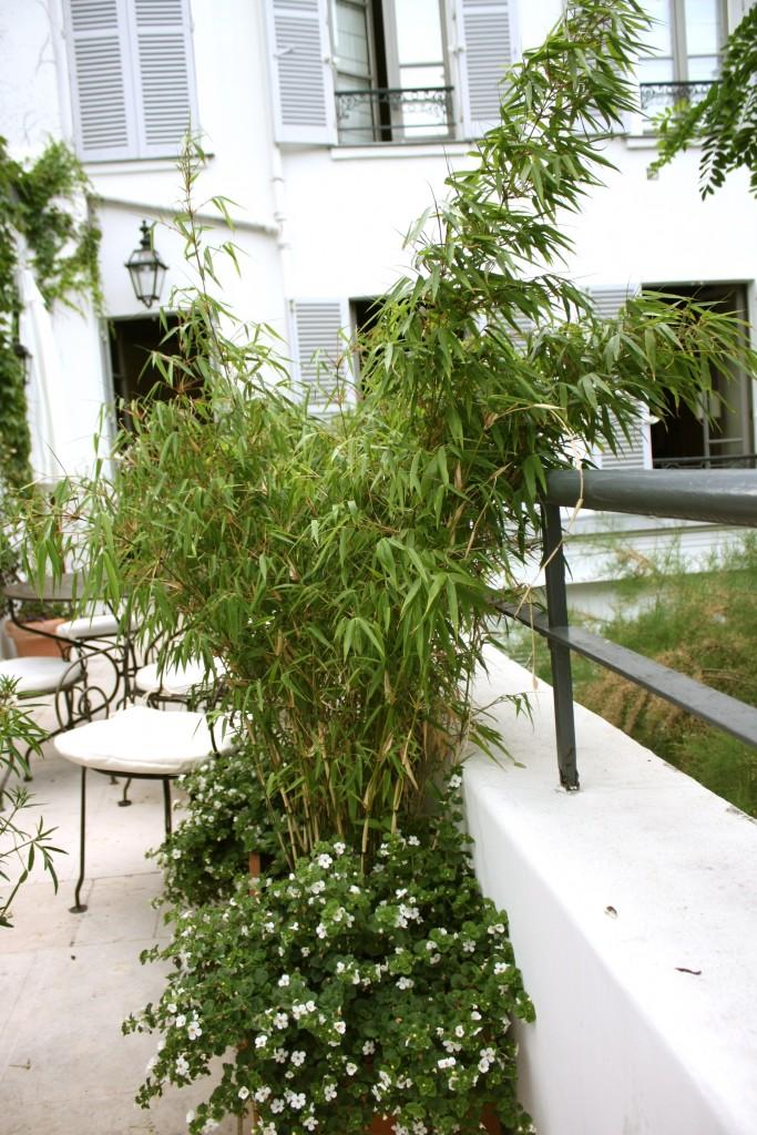 Cosima terrasse 2